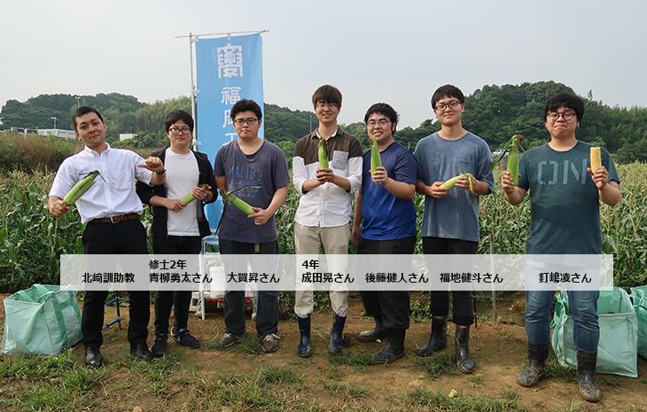 [電気工学科]古賀市特産スイーツコーンの種子にプラズマを照射 ついに収穫!照射したコーンは実が重い!?